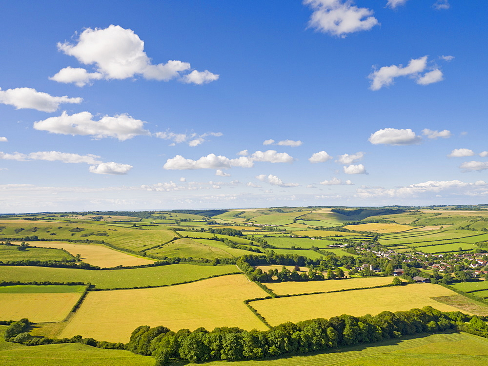 Aerial View Of Green English Farm Fields In Dorset (Drone) - 786-10224