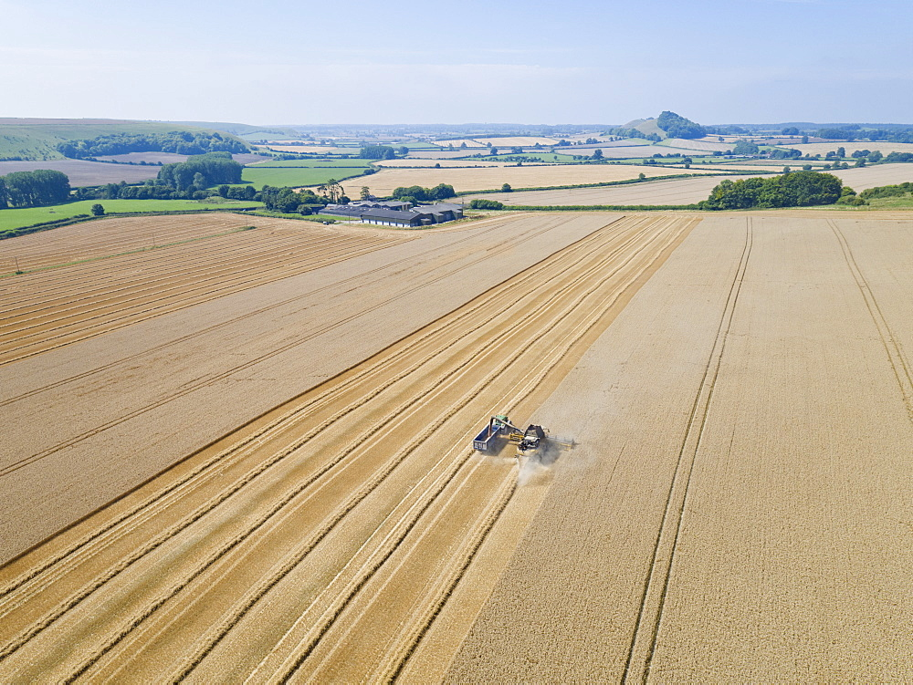 Aerial View Of Combine Harvester Harvesting Wheat Crop (Drone) - 786-10229