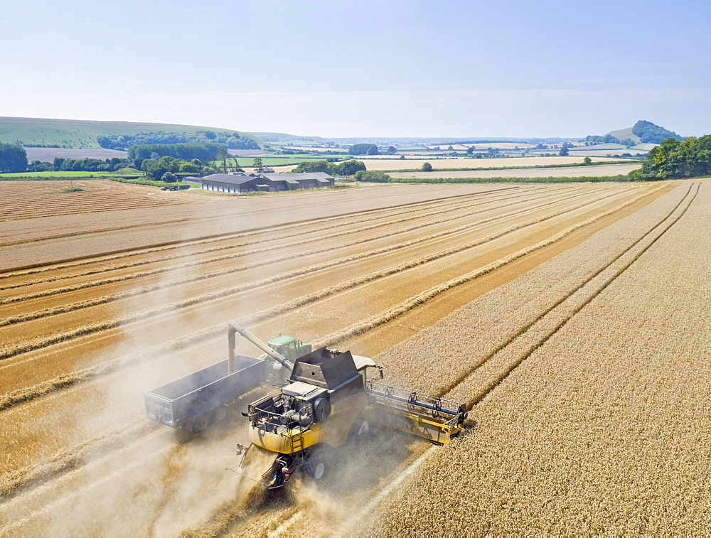 Aerial View Of Combine Harvester Harvesting Wheat Crop (Drone) - 786-10230
