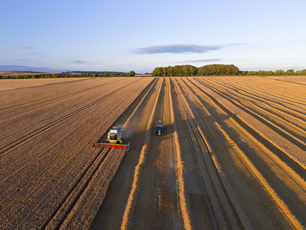 Aerial View Of Combine Harvester Harvesting Wheat Crop (Drone)