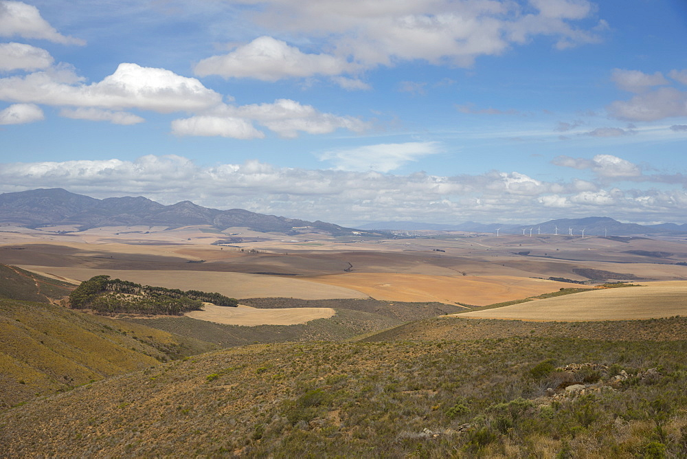 Arid Agricultural Landscape In Western Cape Region Of South Africa - 786-10343
