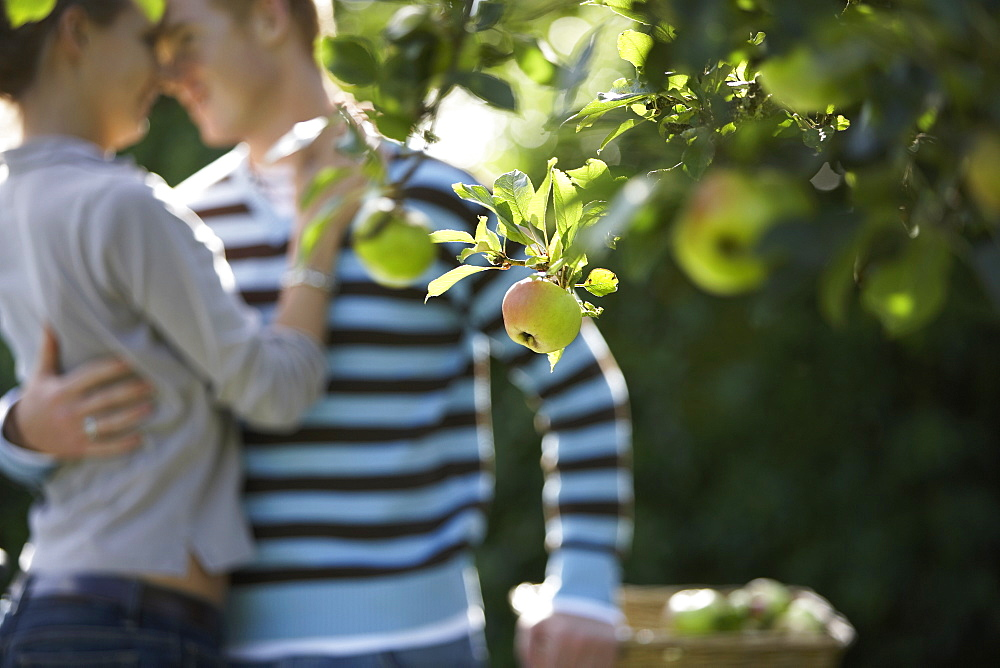 Affectionate couple embracing in garden, focus on apple tree in foreground