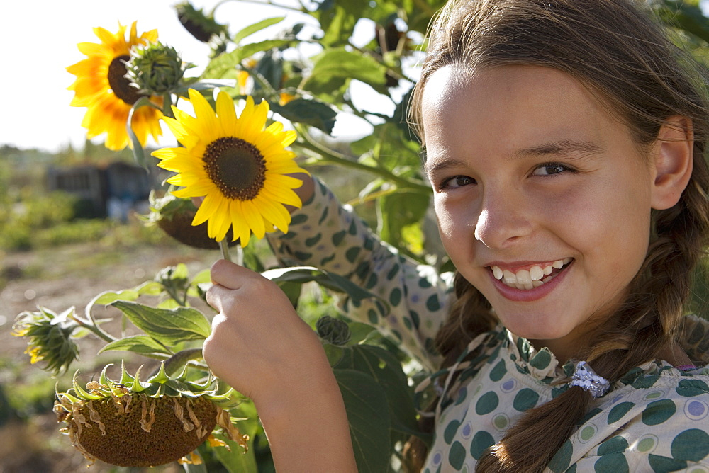 Girl (9-11) holding sunflowers growing in garden, smiling, side view, close-up, portrait