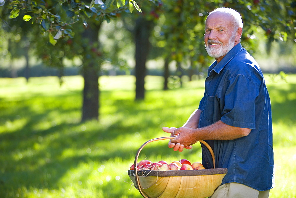 Senior man with basket of apples in orchard, smiling, portrait