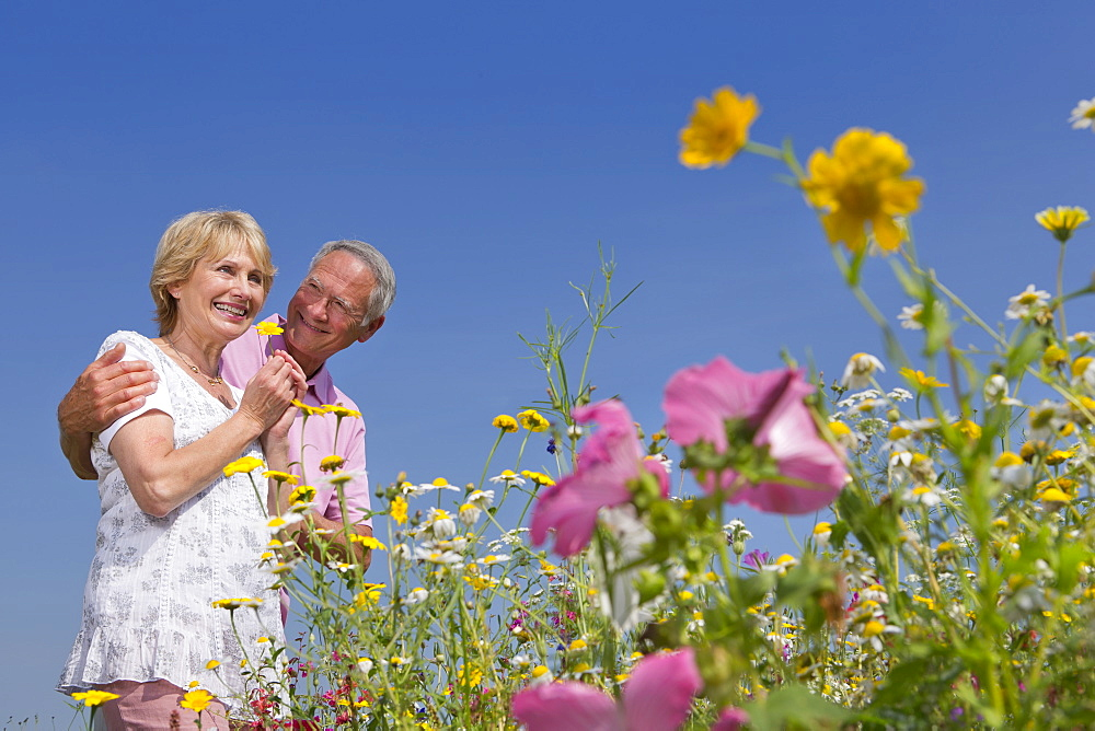 Smiling couple smelling wildflowers in sunny meadow