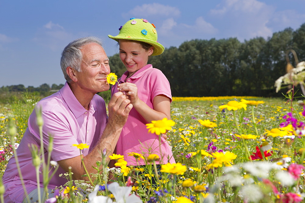 Smiling grandfather and granddaughter smelling wildflowers in sunny meadow