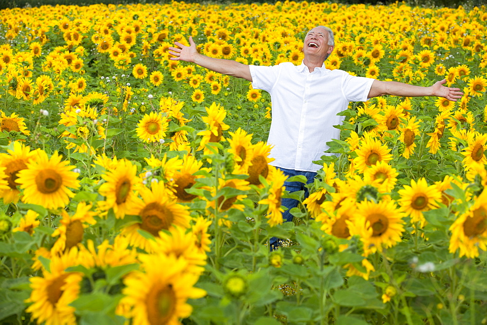 Exuberant man with arms outstretched among sunflowers in sunny meadow