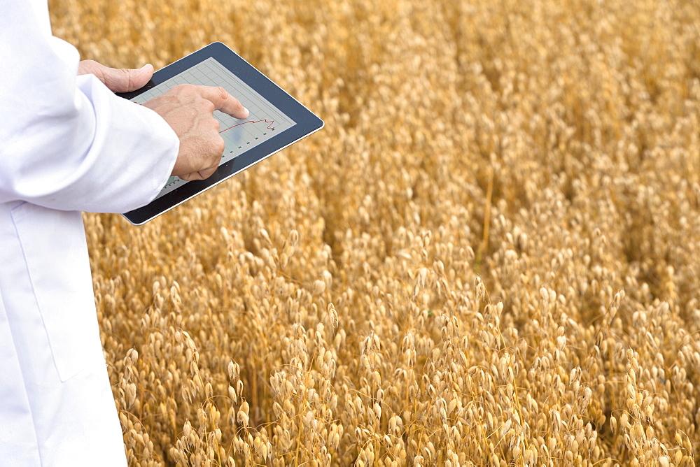 Scientist Examining Oat Crop In Field With Digital Tablet