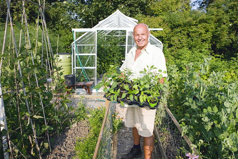 Senior Man Working In Cottage Vegetable Garden