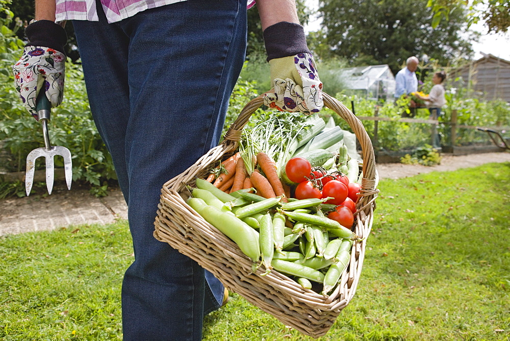 Close Up Of Grandmother With Basket Of Freshly Picked Vegetables