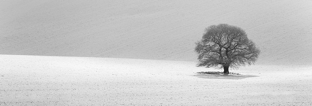 Isolated tree in snow covered landscape - 786-6854