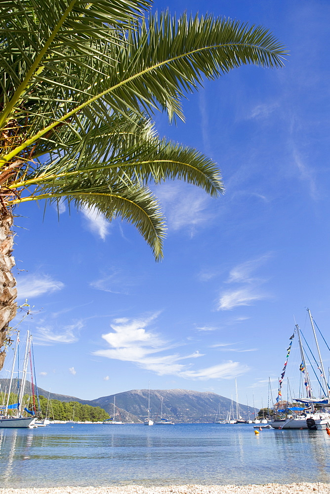 Greece, Kefalonia, Fiskardo, view of palm tree and boats in harbour