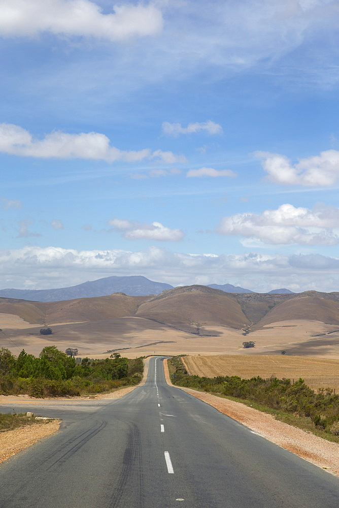 Straight Road Running Through Arid Agricultural Landscape In Western Cape Region Of South Africa - 786-10342