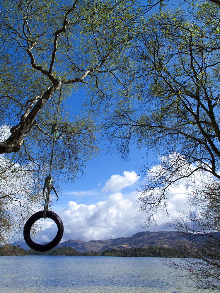 Tire swing hanging from tree over tranquil lake