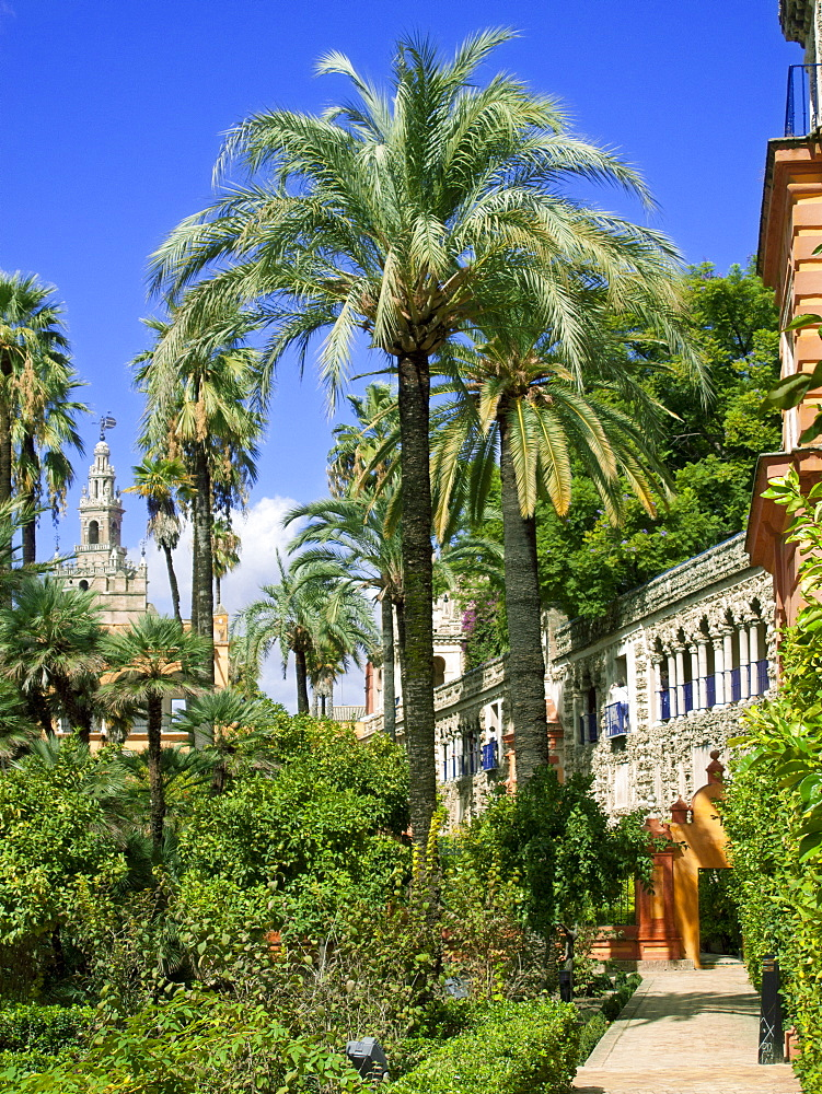 Palm trees and walkway, Alcazar, Seville, Spain