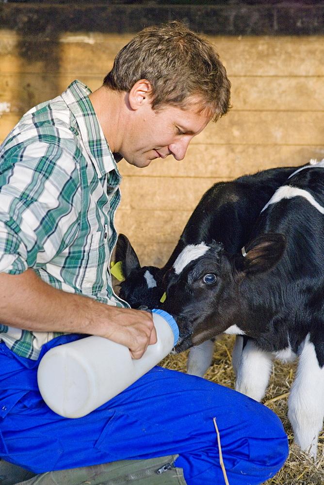 Farmer Hand Rearing Orphaned Calves