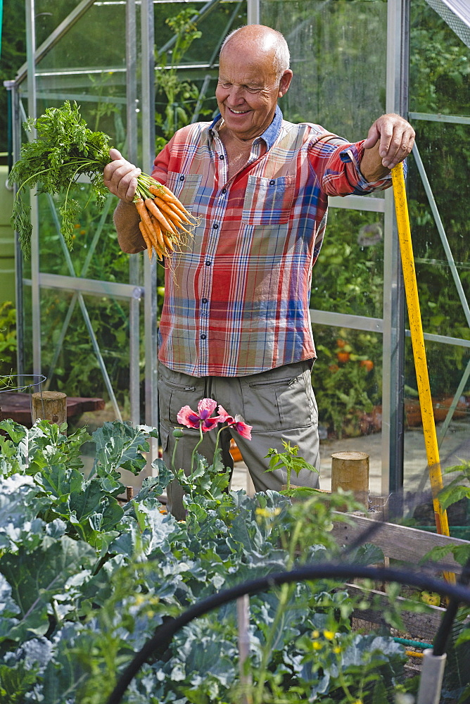 Senior Man Working In Vegetable Garden