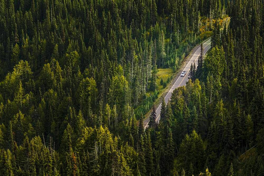 Aerial view of a dirt road through a thick forest in Olympic National Park. - 1174-10011