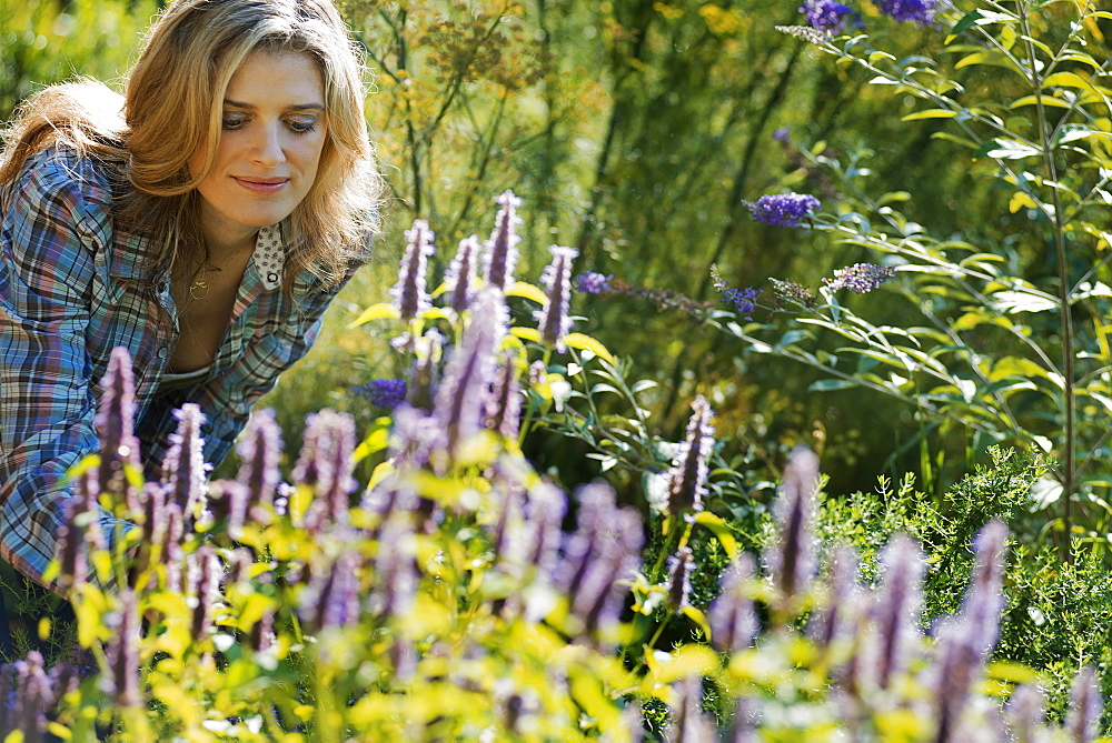 Woman tending a field of organic flowers at an organic flower nursery, Woodstock, New York, USA