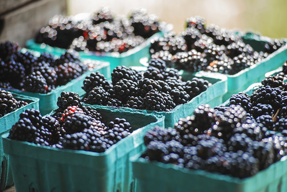 Organic blackberries in punnets at a market stall, Woodstock, New York, USA
