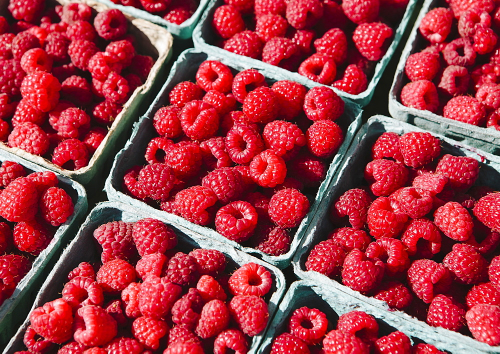 Boxes of organic raspberries on a farmers market stall, Seattle, Washington, USA