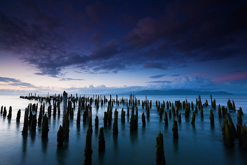 The weathered remains of wood pilings. Upright wooden stumps in water. Oregon, USA, Columbia River Gorge, Oregon, USA