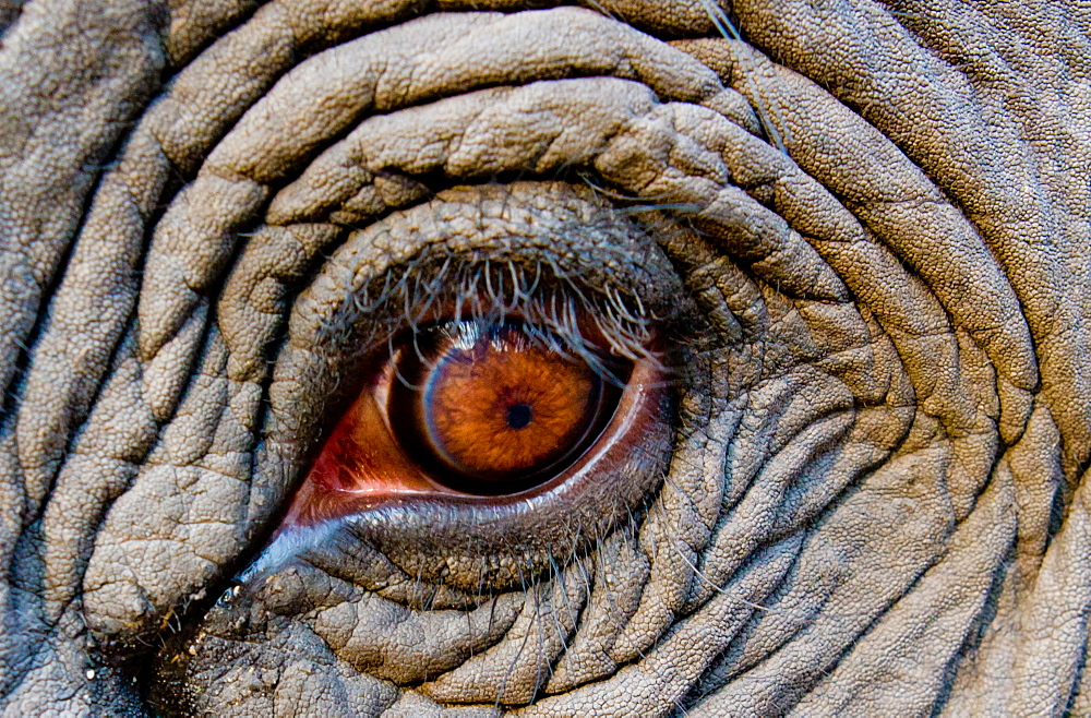 Elephant eye, Bandhavgarh National Park, India, Bandhavgarh National Park, India