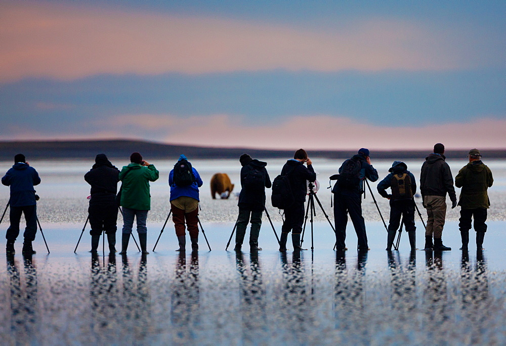 Photographers, brown bear, Lake Clark National Park, Alaska, USA, Ursus arctos, , Lake Clark National Park, Alaska, USA