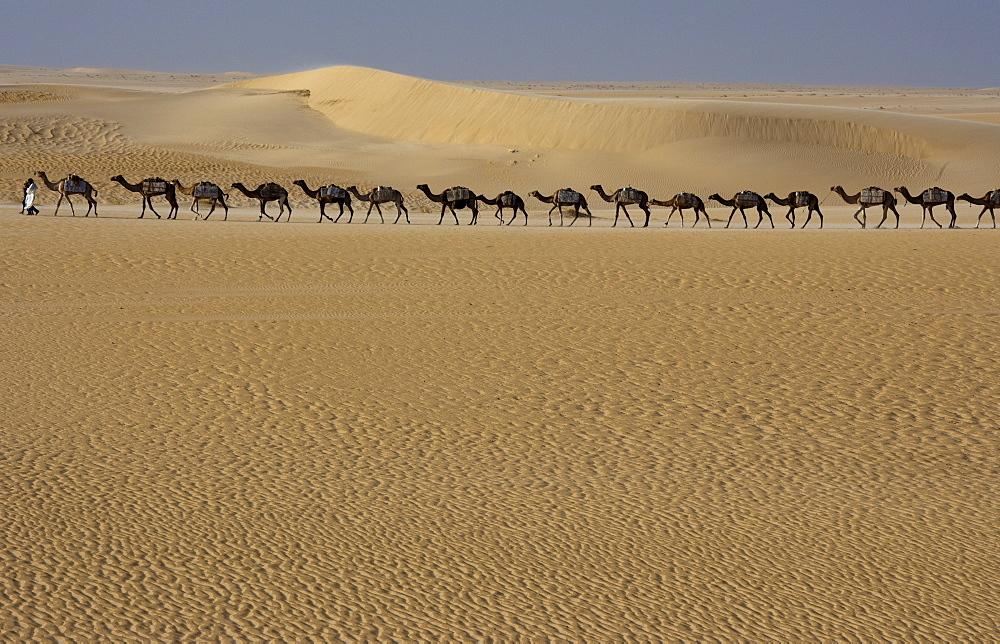 Camel train, Mali, Sahara Desert, Mali