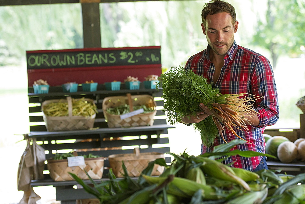 A farm stand with fresh organic vegetables and fruit. A man holding bunches of carrots, Rhinebeck, New York, USA