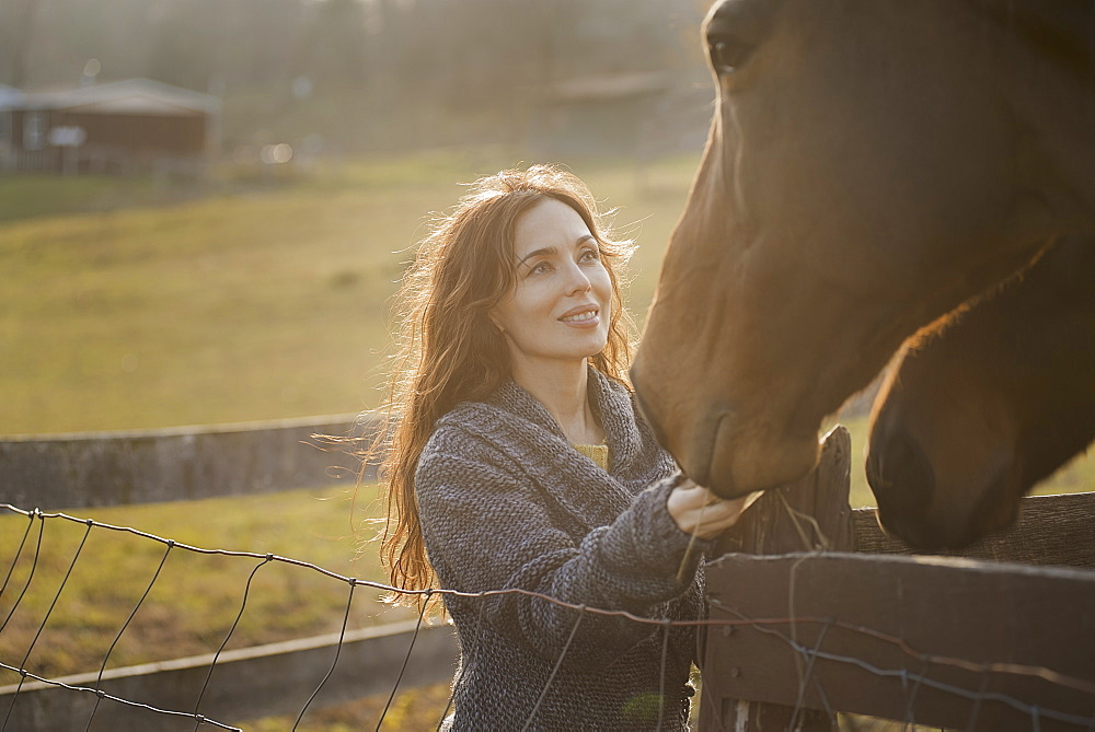 A woman stroking the muzzles of two horses in a paddock on an organic farm, Saugerties, New York, USA