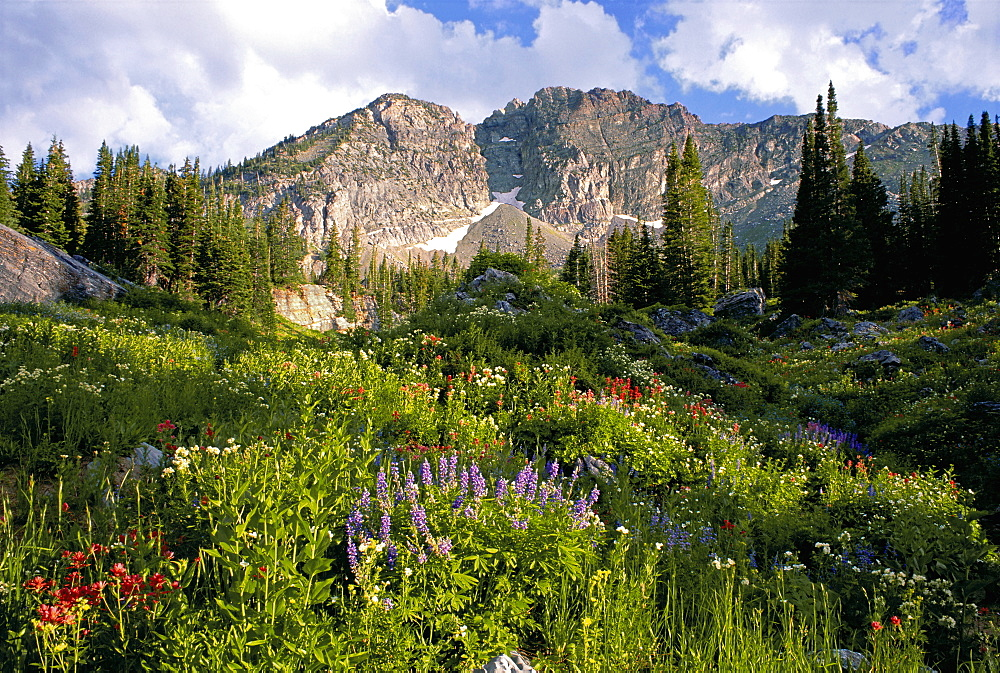 Landscape of Little Cottonwood Canyon, with the Devil's Castle mountain peak, in the Wasatch mountain range. Wild flowers in tall grass, Wasatch Mountains, Utah, USA