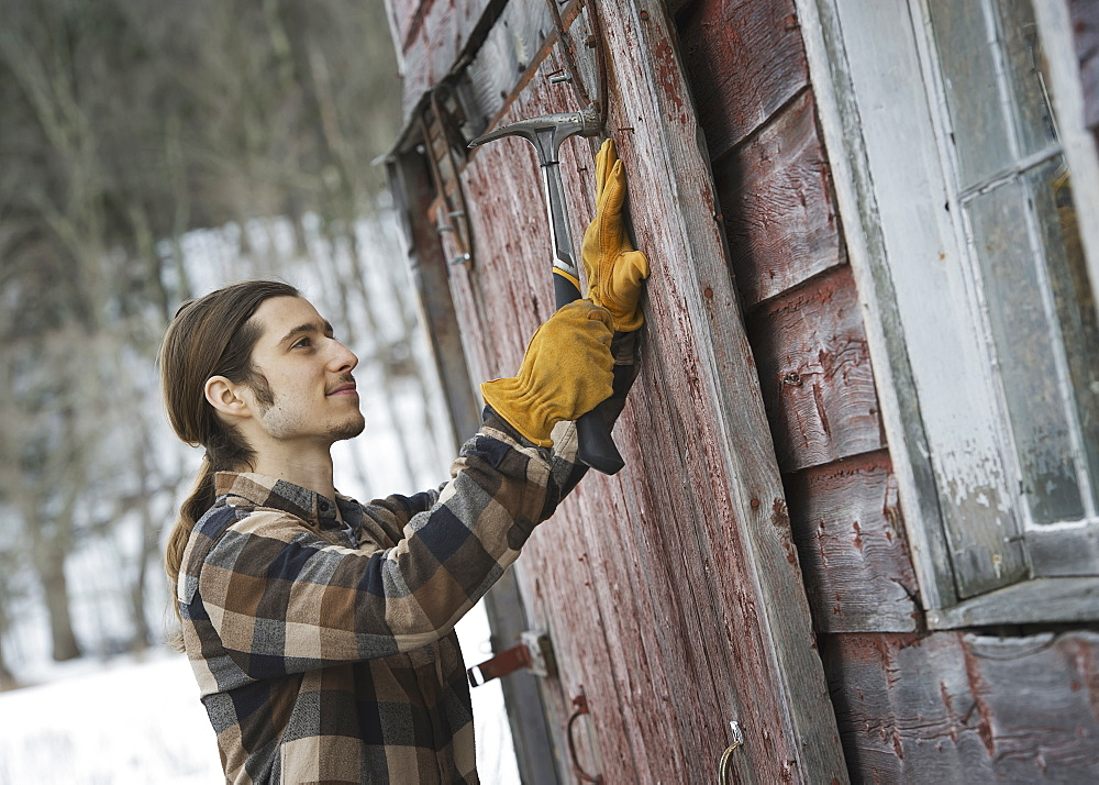 An organic farm in winter in New York State, USA. A man with a hammer, mending a barn door, West Kill, New York, USA