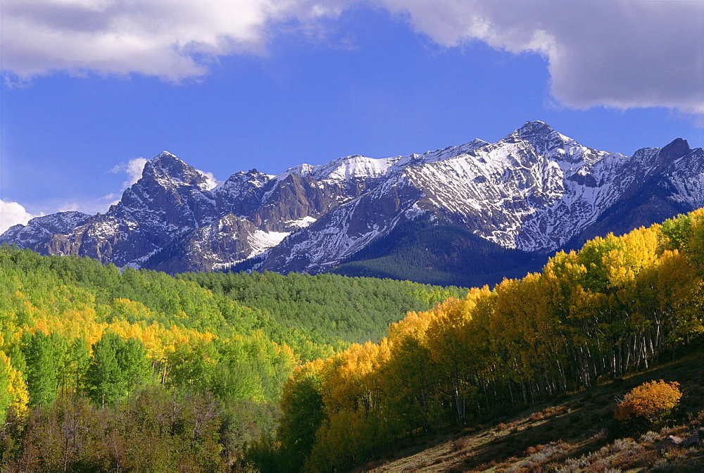 Mount Sneffels in the San Juan Mountains, in Ouray County. Aspen trees in autumn, Mount Sneffels, Colorado, USA