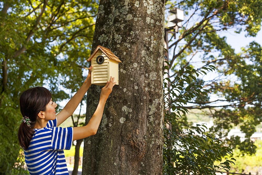Woman putting a bird house on a tree, Kyoto, Honshu Island, Japan