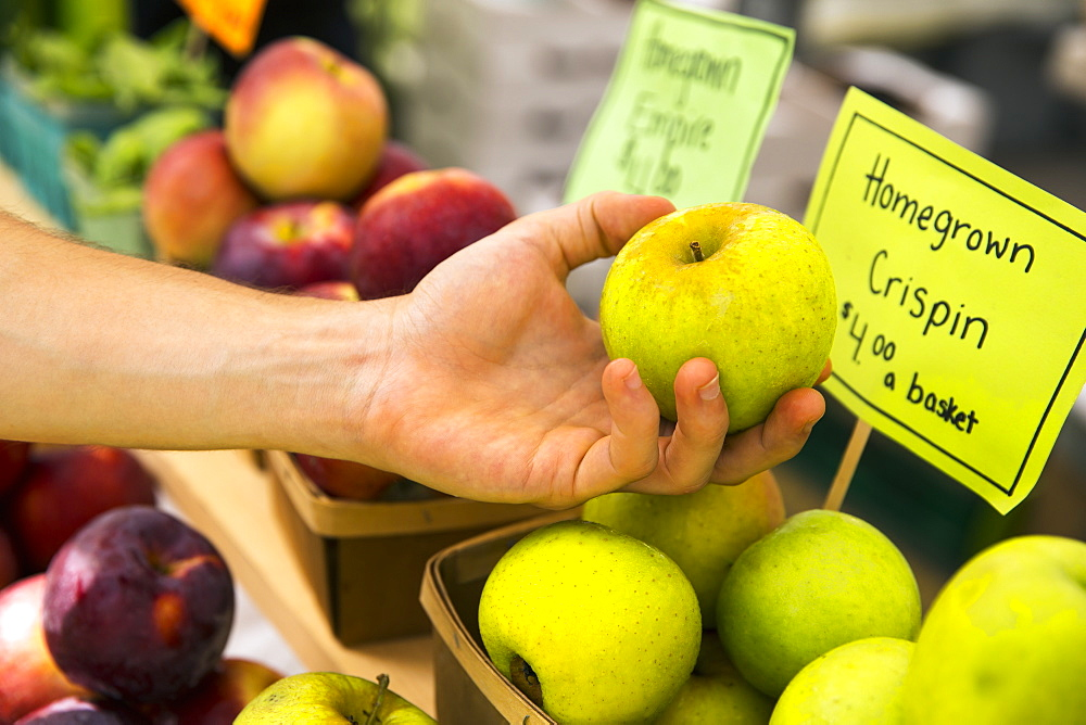 A farm stand with fresh fruit on display. A person selecting apples, Woodstock, New York, USA
