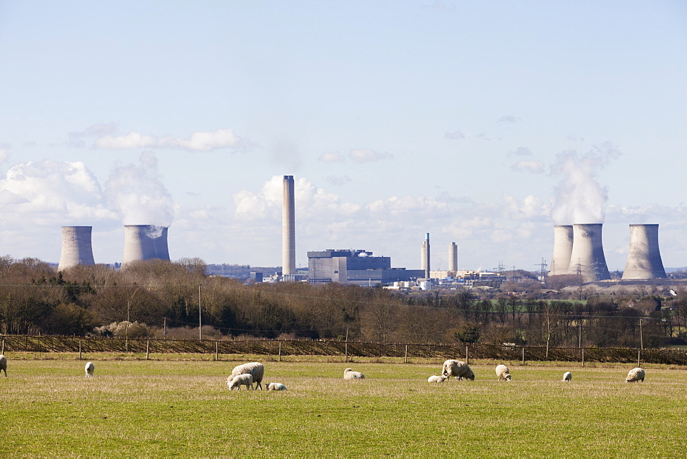 Herd of sheep on a meadow. Didcot coal fired power station in the background, Oxfordshire, England