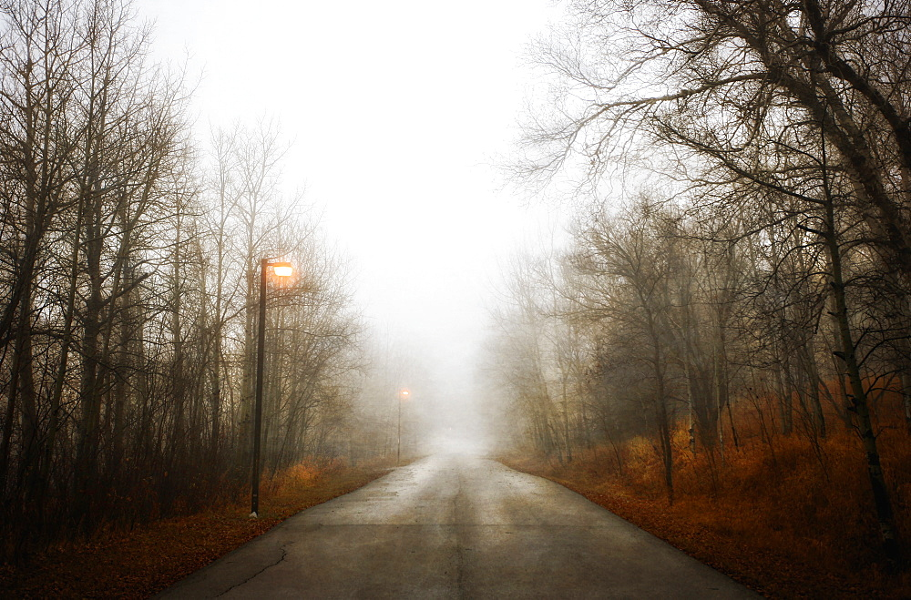 A road through the woods in winter, lit by street lights. Low mist, Misty path, Saskatchewan, Canada