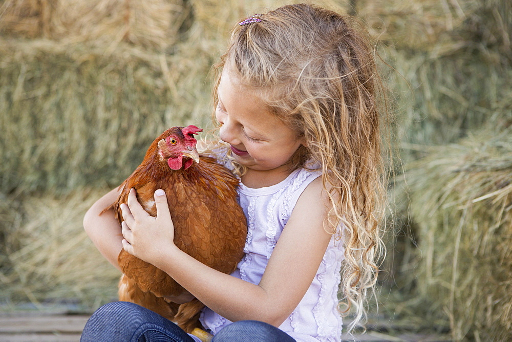 A young girl holding a chicken in a henhouse, Texas, USA
