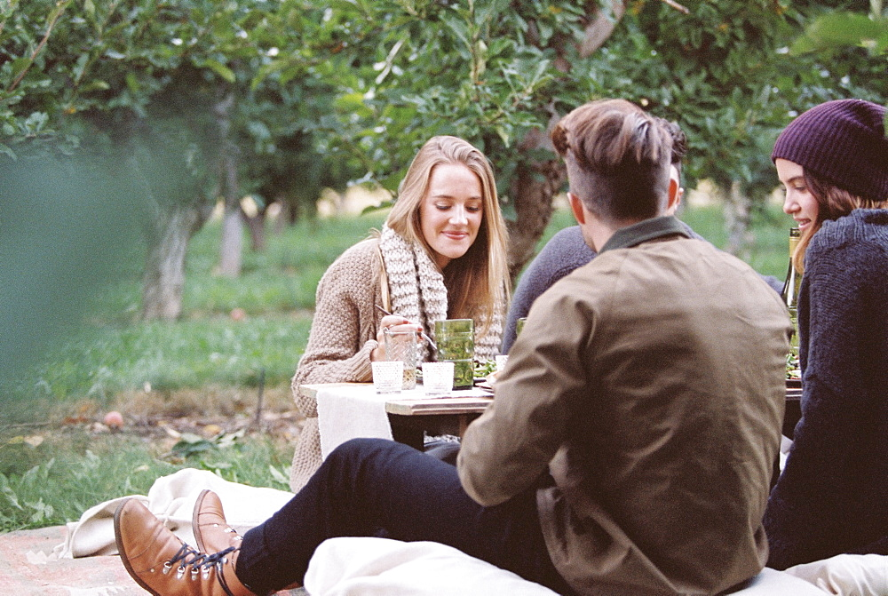 An apple orchard in Utah. Group of people sitting on the ground, food and drink on a table, Sataquin, Utah, United States of America