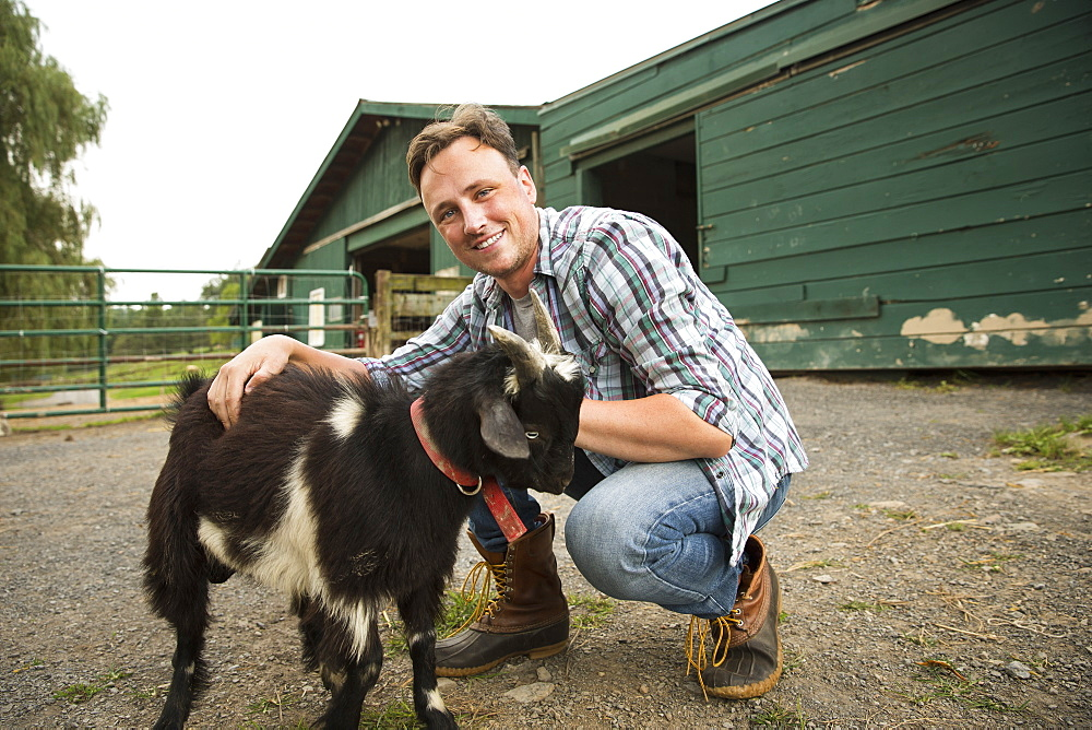 An organic farm in the Catskills. A man with a small goat on a halter, Saugerties, New York, USA