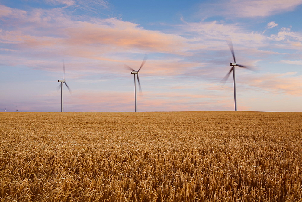Wind turbines at dusk in a field of summer wheat, Energy production, Washington, USA