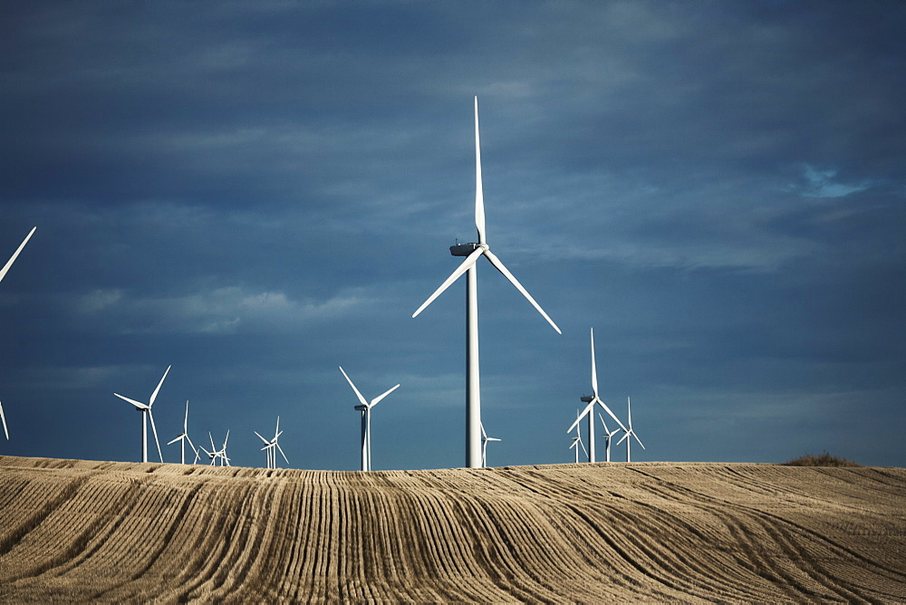 A number of wind turbines reaching into the distance in the farming landscape. Fields of stubble, United States of America