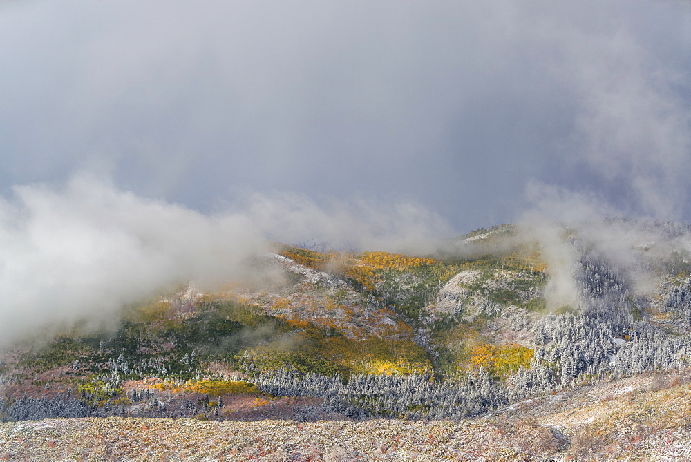 The landscape of the Uinta national forest in autumn, Fall foliage, Utah, United States