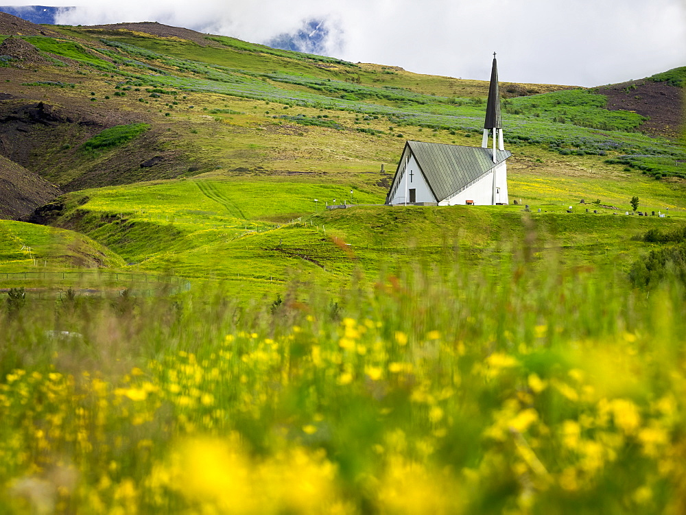 Mosfellskirkja church in a rural landscape and flower meadows, Iceland
