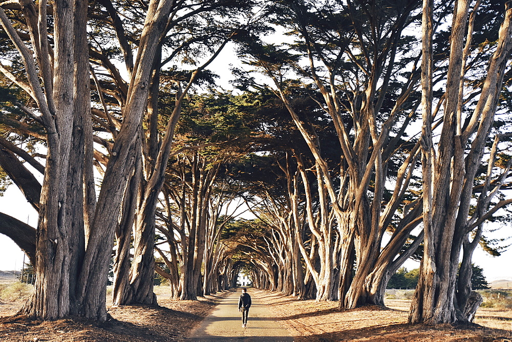 Man walking along a tree lined country road.