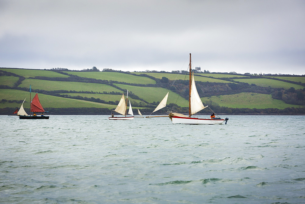Traditional sailing boats off the coast of the estuary on the River Fal, Falmouth, Cornwall, Fal Estuary, Cornwall, England