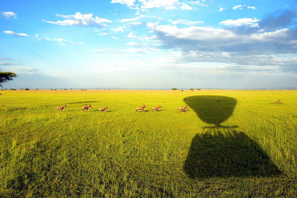 The shadow of a hot air balloon over a herd of animals moving through grassland.