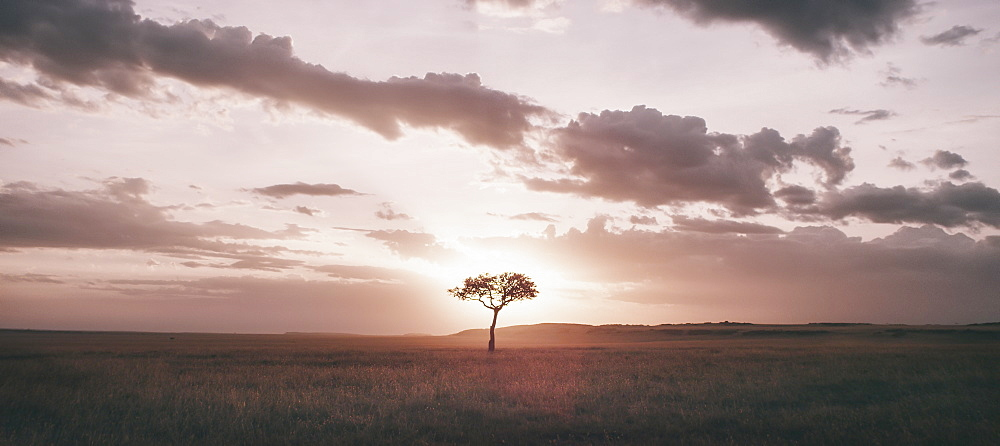 A tree growing in a flat grassland landscape at dusk.