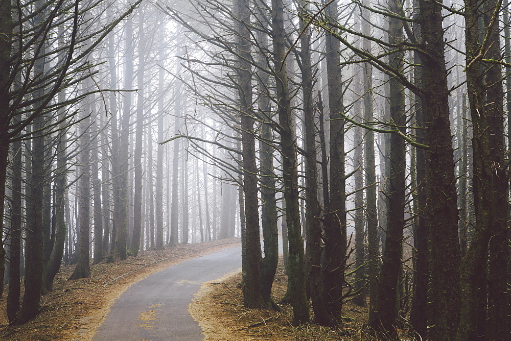 A road winding through trees in the forest, mist hanging in the air. - 1174-4637